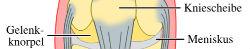 Thumbnail image for Knieschmerzen bei Läufern – Die Ursachen finden!