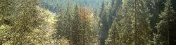 Thumbnail image for Einfach mal entschleunigen, oder: der deutsche Wald!